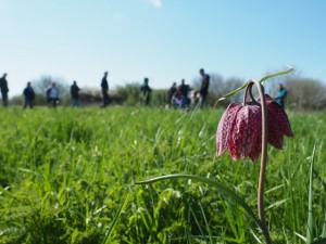 Fritillary Walk at Broad Meadow LNR © R. Gries, Warwickshire Wildlife Trust 2015