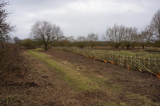 Feb-17 Hedge newly laid in Midland Bullock style