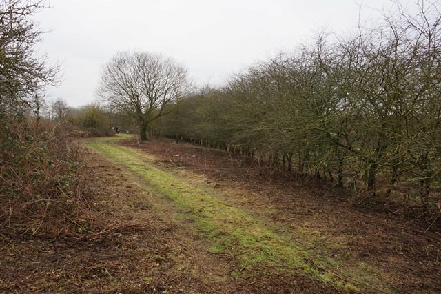 Jan-17 Hedgerow before works, gappy at bottom and turning into trees