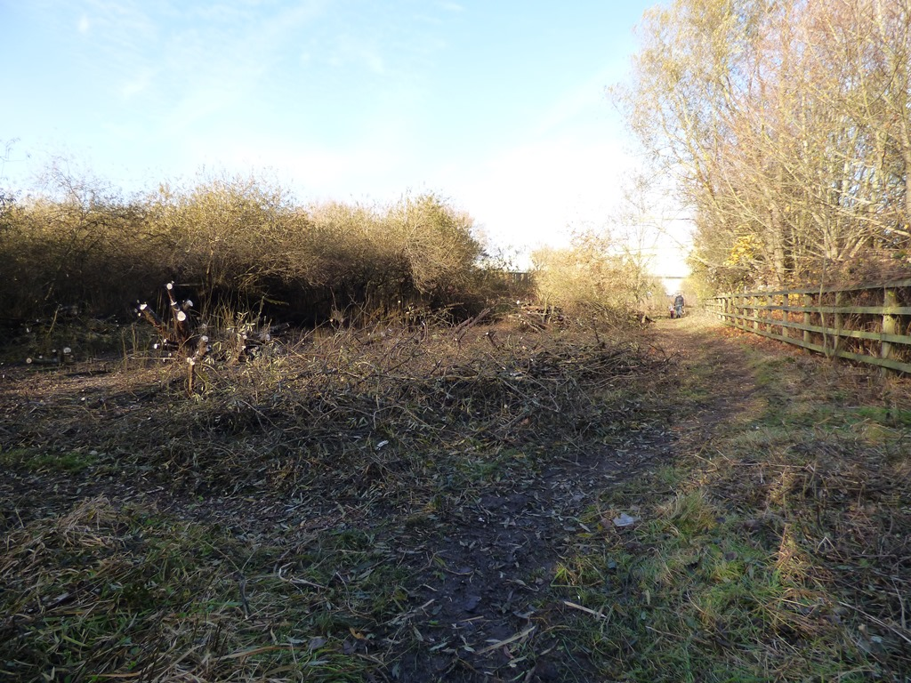 Work on the willows continues at Borrowpit Lake