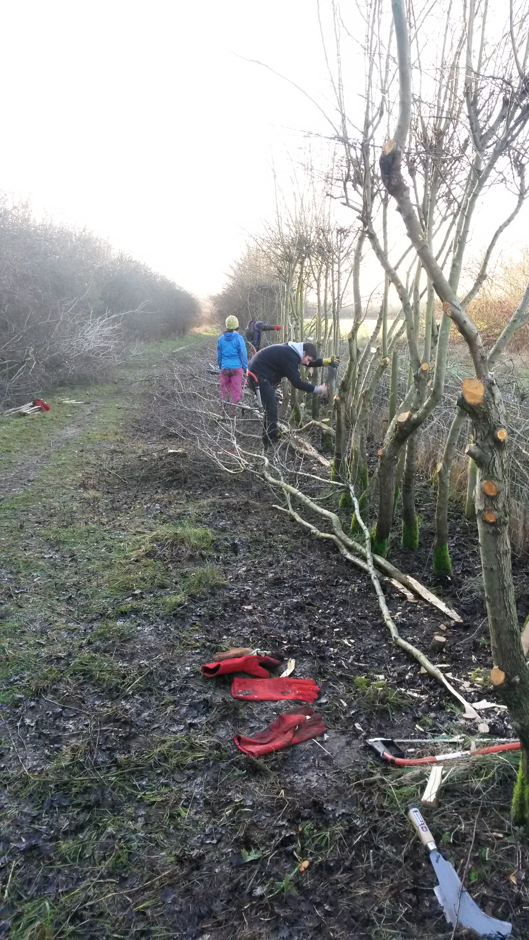 Tameforce volunteers laying a hedge at Kingsbury Water Park, © Tame Valley Wetlands, Warwickshire Wildlife Trust 2017