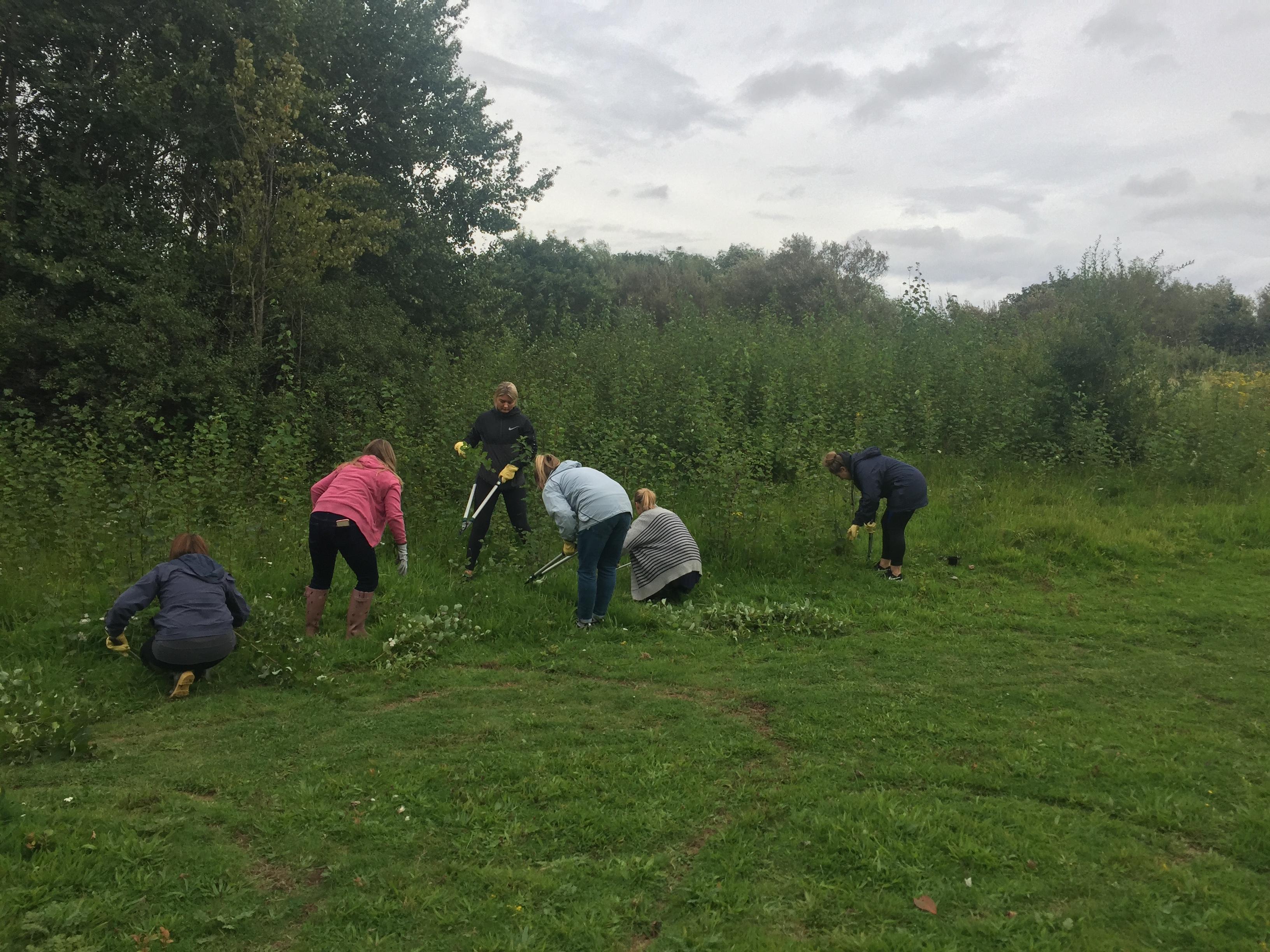 Grassland Management and Restoration – LYRiC