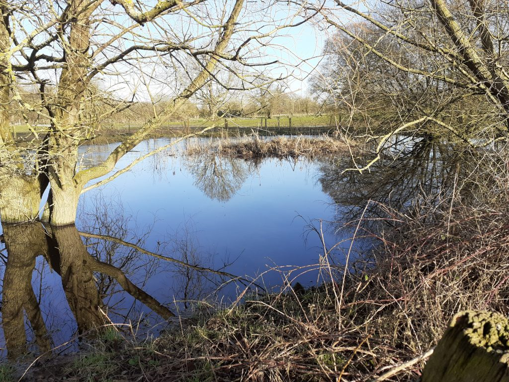 Site for pond restoration at Dairy Farm