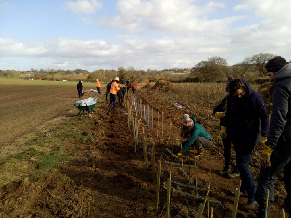 Volunteers planting hedgerows at Packington Estate