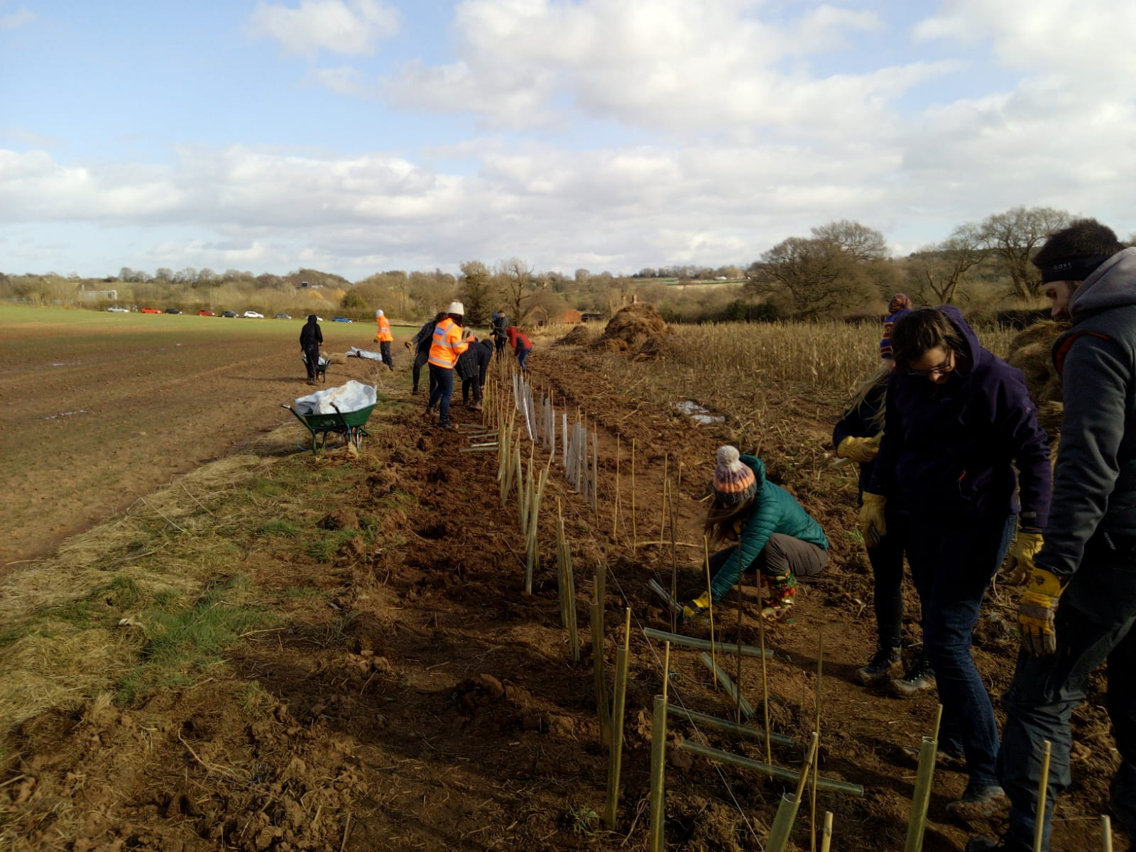 Hedgerow planting